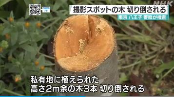 konaji-fumikiri-kiritaosu