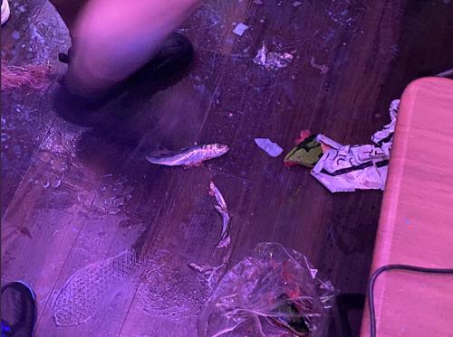 planckstars-tanakakoharu-katudoukyuushi-riyuu